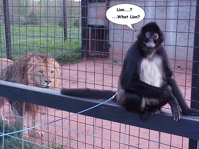Monkey Pictures - pict...